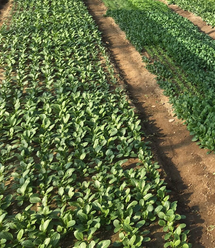 農業経営をもっと力強く