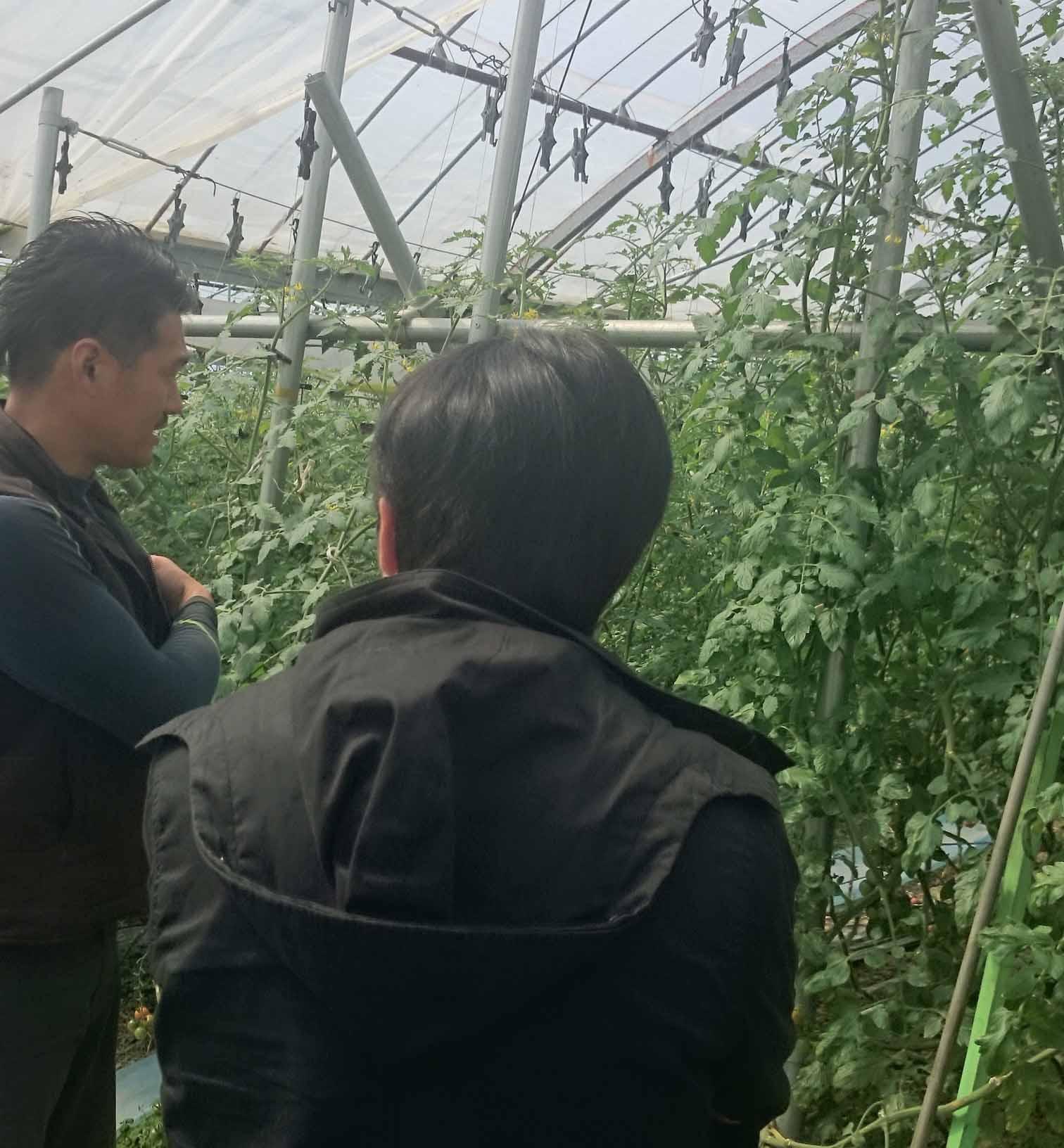熊本の「まる隆ミニトマト」坂上農園様